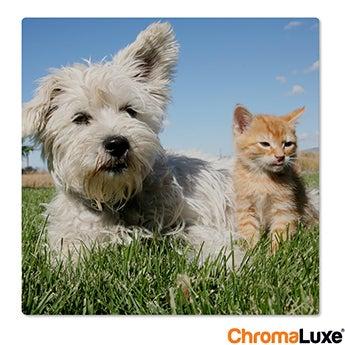 Chromaluxe Fototafel -  Weiß 50x50 cm
