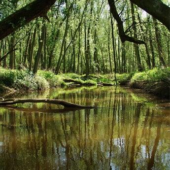 Boottocht Biesbosch