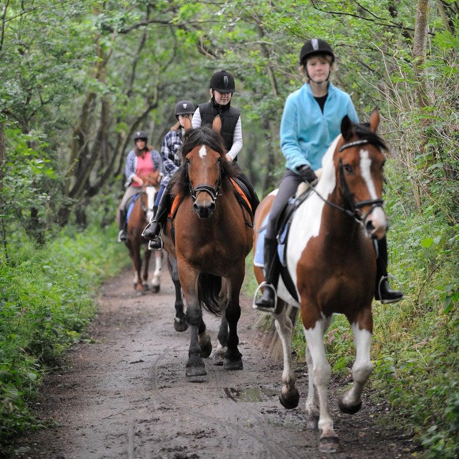 Paardrijden in de duinen (beginners)