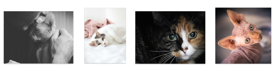personalised cat photo wall decor
